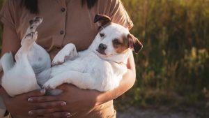 אביזרים ממותגים ואיכותיים לכלבים הכירו את unimal