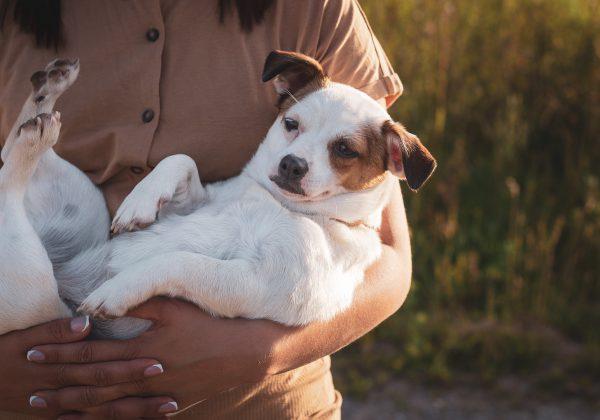 אביזרים ממותגים ואיכותיים לכלבים: הכירו את unimal